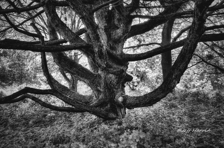 chaos, trees, Jeff Harold