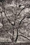 Home Tree