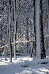 Winter - Drawbridge